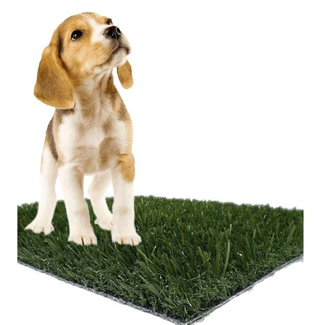 how to dogs to on pads pet pads