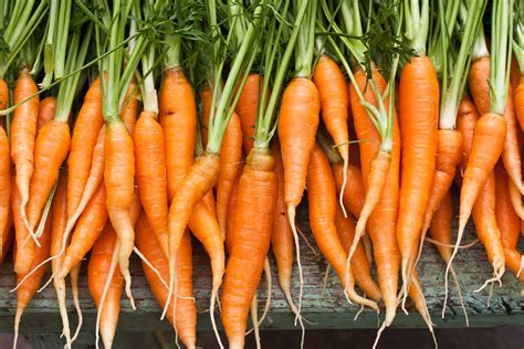 coding for carrots solutions carrots carrots and more carrots compli