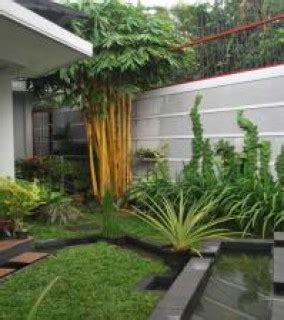 Bibit Rumput Gajah Di Makassar harga tanaman untuk taman minimalis tanamanbaru