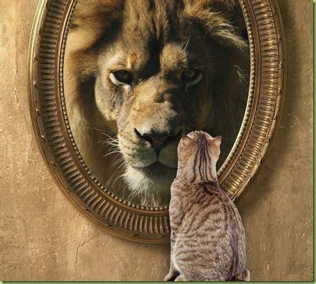 Cat Mirror cat looking in mirror sees tattoos