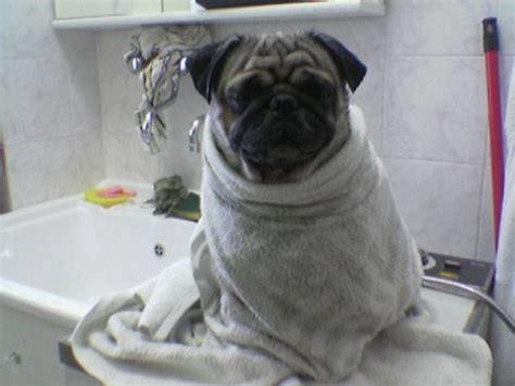 bellezza al bagno bellezza al bagno petpassion