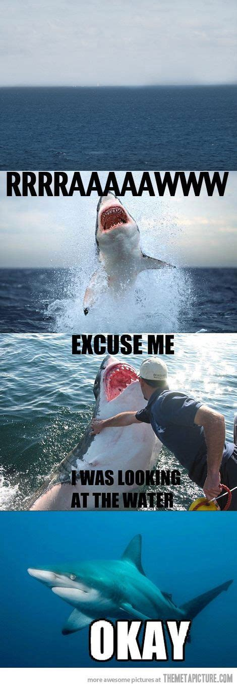 Sad Shark Meme - sharks excuse me and funny on pinterest