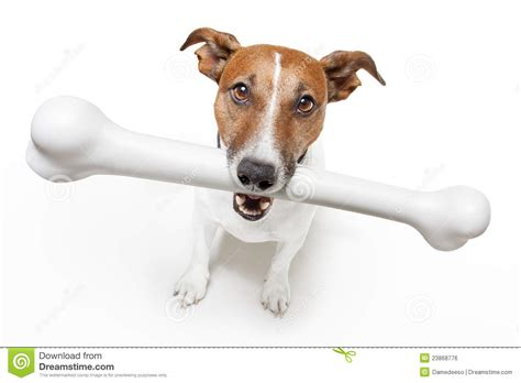 with a bone with a white bone royalty free stock image image 23868776