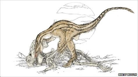 what does velociraptor eat it fossil find shows evidence of a velociraptor feeding upon