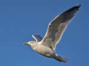 Make flygende m 229 ke i profil tek no