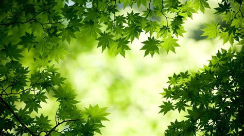 green wallpaper for eye relaxation the 10 nature green color hd wallpapers good for your