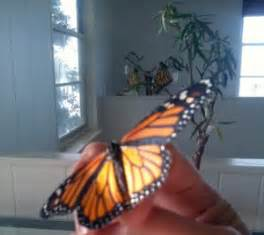 which british monache introduced the christmas tree to uk monarchs hatch from tree what s that bug