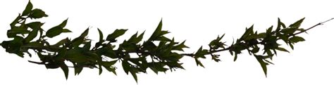 Prarie Style by Leafy Tree Plant Branch Branchleaves Png Liberated
