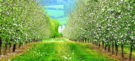 fruit zone 5 how to grow fruit and nut trees in zone 5 7 more