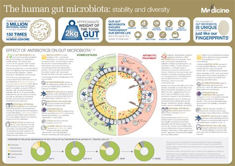 and human the human gut microbiota stability and diversity fx medicine