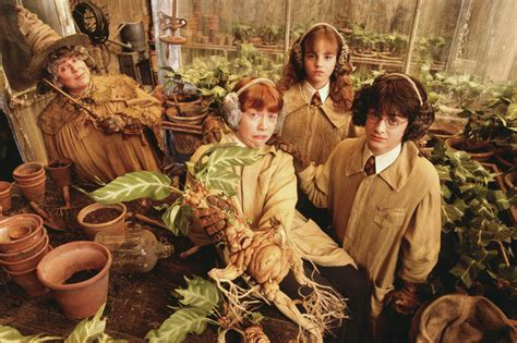 can you identify these magical harry potter plants trivia quiz zimbio
