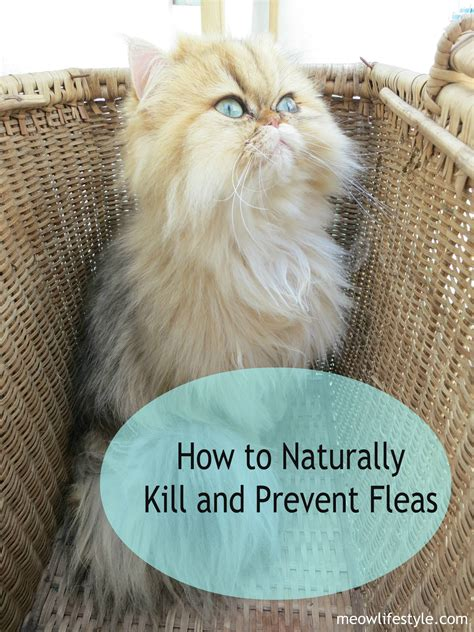 how to kill dog fleas in the house kill fleas in carpet naturally
