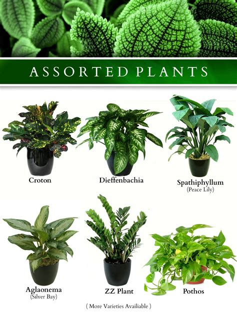 garden plants names and pictures plants exotic plants