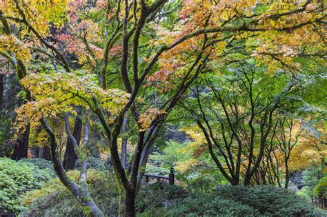 fall colors at portland japanese garden stock photo image 46494824