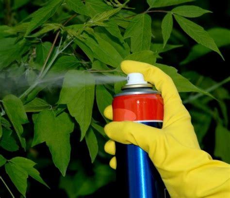imagenes de insecticidas naturales insecticidas y fungicidas naturales