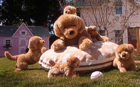 are golden retrievers family dogs golden retriever family 4 high resolution wallpaper dogbreedswallpapers