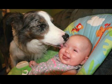 dogs meeting babies dogs meeting babies for the time 1funny