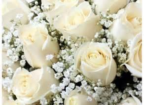 imagenes de rosas rojas y blancas imgenes de rosas fotos de rosas rosas rojas blancas y