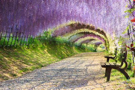 flower tunnel japan 29 bucket list worthy landscapes that will steal your