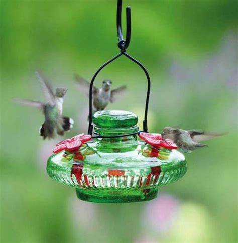 modern bird feeders attract birds  add beautiful yard