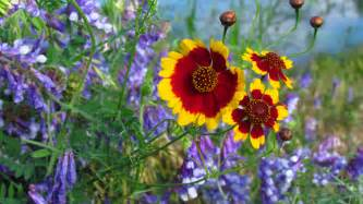 Gardening Hardiness Zones - why wildflowers american meadows blog