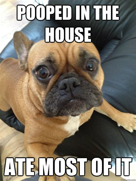 Bulldog Meme - funny french bulldog memes image memes at relatably com