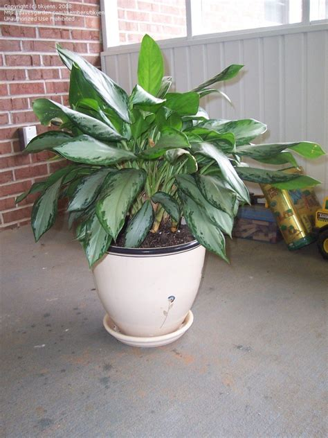common house plants for funerals plant identification closed popular funeral plant what