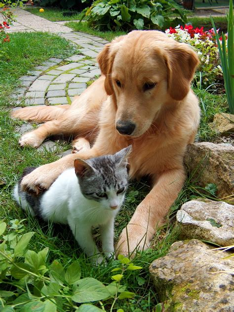 puppy or kitten dogs and cats are typically right or left pawed