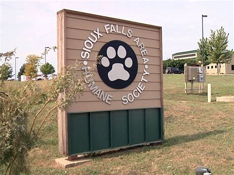 sioux falls humane society dogs kelo tv teaming up with humane society for pet food drive