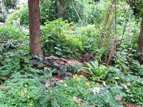 Garten Pflanzen Unter Nadelbäumen by Bepflanzung Unter B 228 Umen Alte B 228 Ume Unterpflanzen