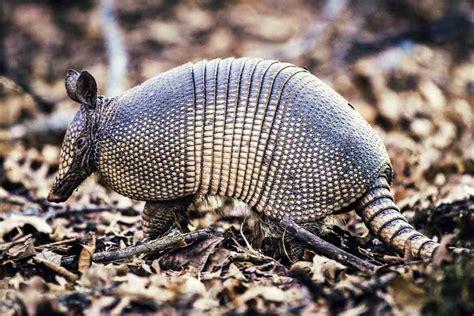 imagenes sorprendentes de animales extraños animales ex 243 ticos y los destinos m 225 s fascinantes para