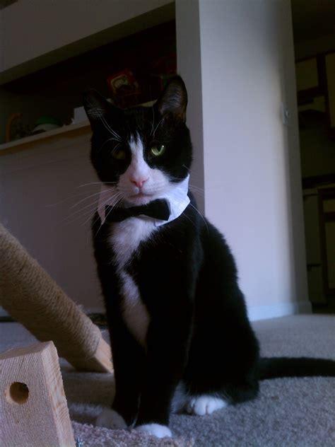 heres  james bond        cat