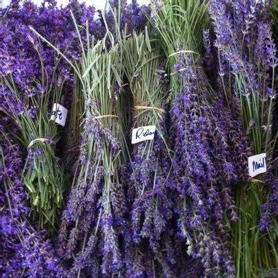 different varieties of lavender lavender madness pinterest