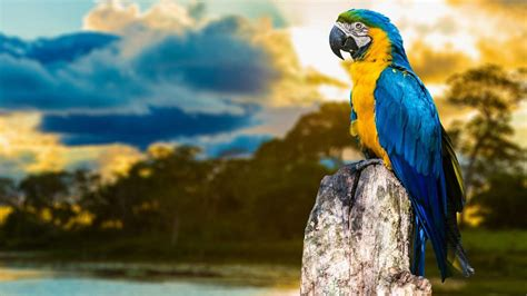 wallpapers macaw bird wallpapers macaw wallpapers hd download