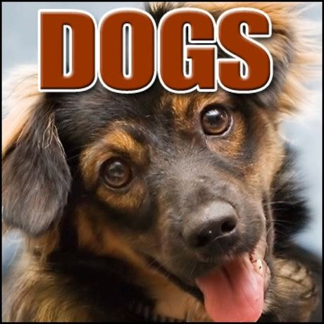 puppy sound effects sound effects library animal large angry growl dogs mp3