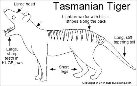 california map enchanted learning tasmanian tiger printout enchantedlearning