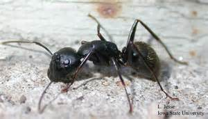 Big Black Ants In Kitchen by A Picnic Is Not Complete Without The Dirt
