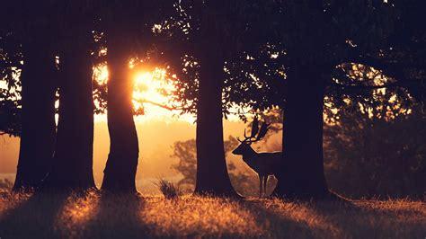 Große Bäume Verpflanzen 3752 by Die 64 Besten Natur Und Tiere Hintergrundbilder