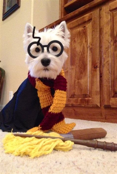 harry potter dog 17 best images about harry potter dogs on pinterest dog