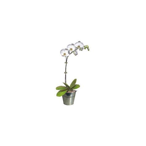 orchid 233 e phalaenopsis blanc pur en fleurs 1 he florale ramifi 233 e cache pot zinc