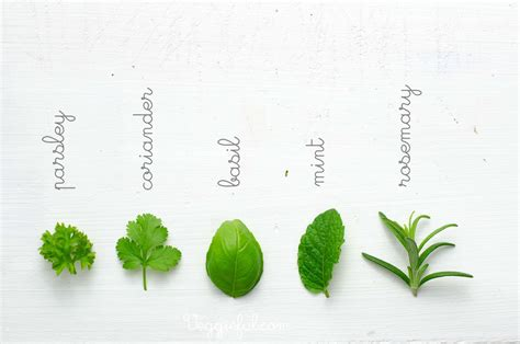kitchen herbs italian cooking what herbs are used in italian cooking