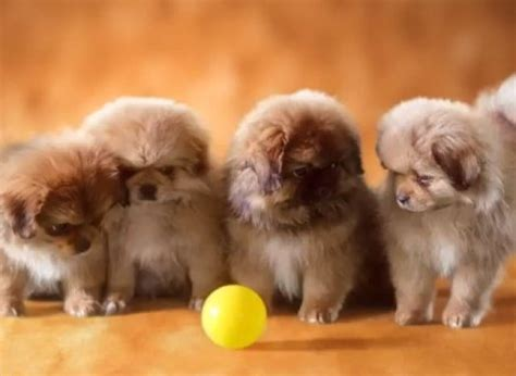 pics of puppys by just this of puppies you re donating money to charity huffpost