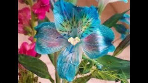 imagenes raras y bellas las flores mas hermosas del mundo xd youtube
