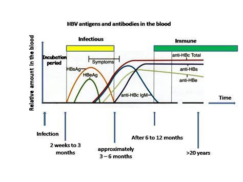 Anti Hbs file hbv serum markers jpg
