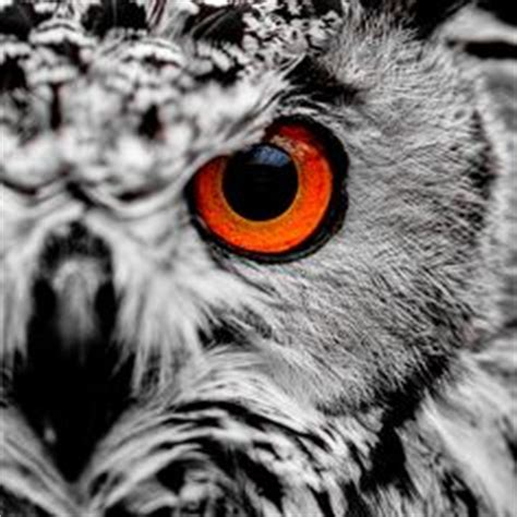 owl tattoo orange eyes animals the eyes have it on pinterest cat eyes eyes