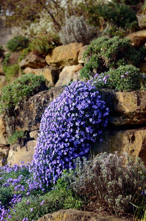 steingarten am hang bilder steingarten anlegen tipps und ideen garten mix