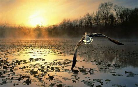 imagenes literarias volar sobre el pantano image gallery el pantano