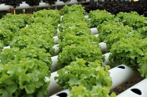 soilless agriculture differs  soil based agriculture