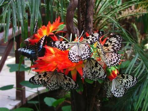 farfalle in casa farfalle tutto su questi insetti meravigliosi tuttogreen