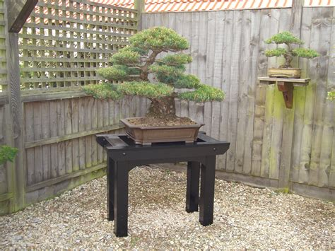 bonsai display bench bonsai display benches bonsai passion